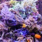 Chingchai Uekrongtham Reef